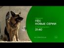Отважный Пёс и его непутевый хозяин вновь вступают в схватку с преступным миром. «Пёс» — новые серии — с 2 октября на НТВ