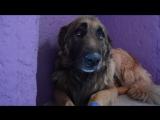С собакой плохо обращались и она не знает, как реагировать на доброту и ласку