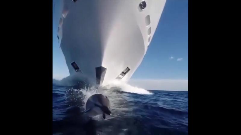 Дельфины выпендриваются, других серьёзных объяснений этим действиям ни у кого нет (VHS Video)