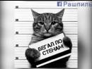 кот арестант