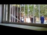 Хромтау учеников школы 2 гимназия заставляют работать в школьной форме