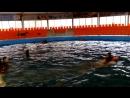 Дельфинотерапия в Джубге