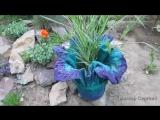 Кашпо-цветок из цемента для сада или дачи