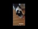 Maverick Do g brev on Instagram Stories 29 01 18