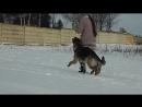 Валентина и Бенджамин ,подготовка проводника и собаки,тренер Козик Екатерина