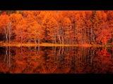 4K Japan Mishaka pond autumn