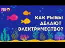 Как рыбы делают электричество