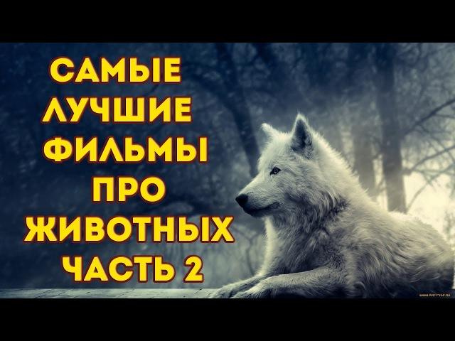 Самые лучшие фильмы про животных часть 2