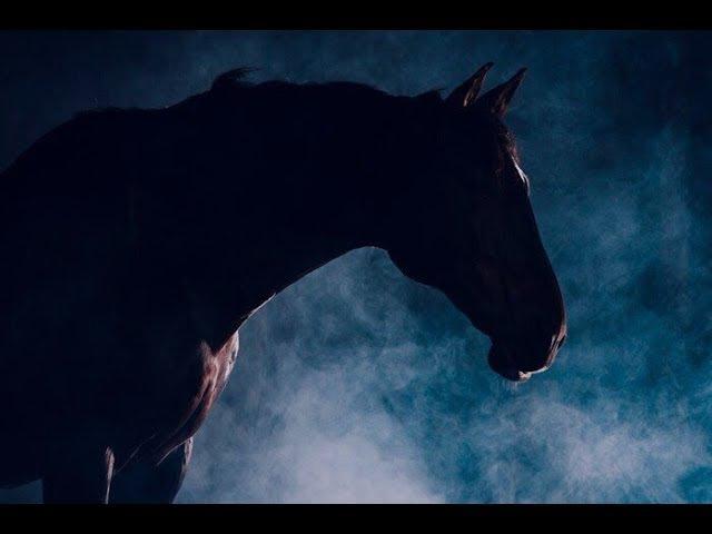 ~ Конный спорт ~ Paralyzed - NF ~ Equestrian sport ~