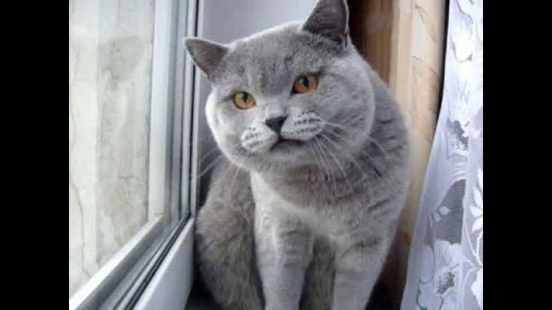 Прикол кот разговаривает