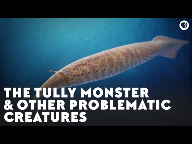 The Tully Monster Other Problematic Creatures