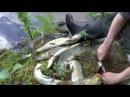 Рыболовное путешествие Кольский полуостров северная Карелия залив Белого моря