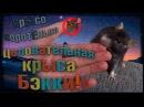 О Бэкки ЦЕЛОВАТЕЛЬНАЯ крыса Fancy Rats Декоративные Крысы