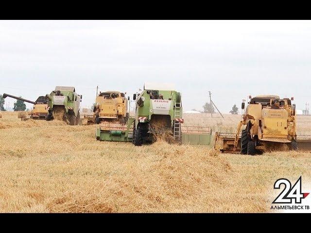 План перевыполнили: альметьевские аграрии подвели итоги года