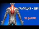 ТРАПЕЦИЯ и МЫШЦЫ ШЕИ 10 ФАКТОВ Биомеханика Тренировки Анатомия