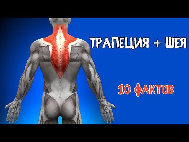 ТРАПЕЦИЯ и МЫШЦЫ ШЕИ. 10 ФАКТОВ. Биомеханика, Тренировки, Анатомия.
