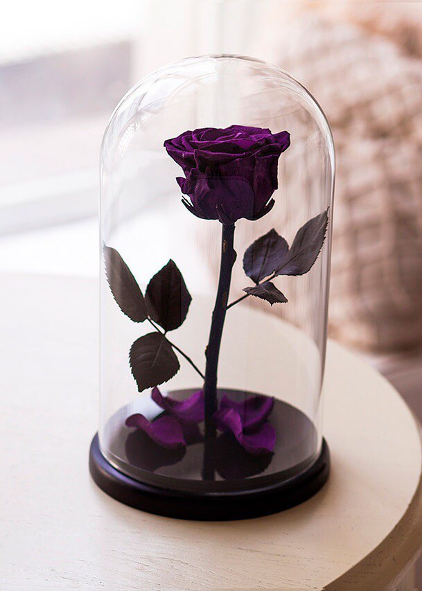 Роза Premium