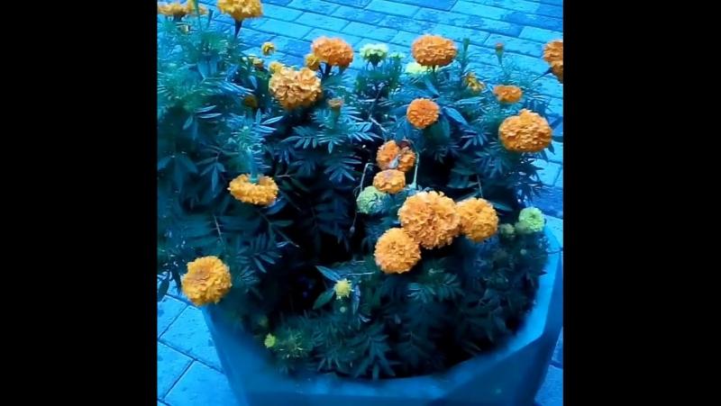 Погода.Барнаул. 20.09.2017. погодамосквапитер... Погода в городах России 20.09.2017