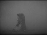 Кинг Конг  King Kong (Мериан К. Купер  Merian C. Cooper, Эрнест Б. Шодсак  Ernest B. Schoedsack) 1933, США, ужасы, фантастик