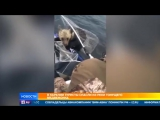 В Карелии туристы спасли из реки тонущего медвежонка
