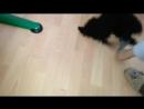 Вадим Черновецкий. -- Моя ученица по английскому героически борется со своей собакой за носок