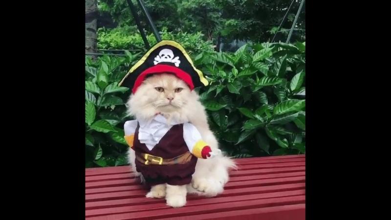 пират 21века