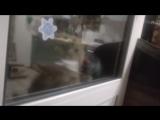 Говорящий кот говорит: