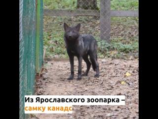 В Костромском зоопарке появились новые обитатели