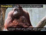 Самые заботливые мамы | NatGeo Wild