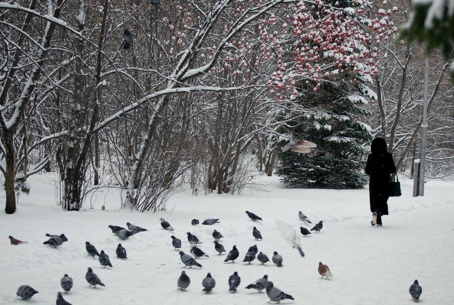 Высота снежного покрова в Томске превысила норму на пять сантиметров