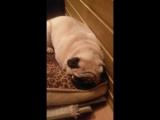 Лора спит она устала)))