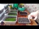 Самые лучшие способЫ посева мелких семян. Лобелия