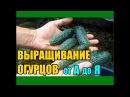 Выращивание огурцов от А до Я