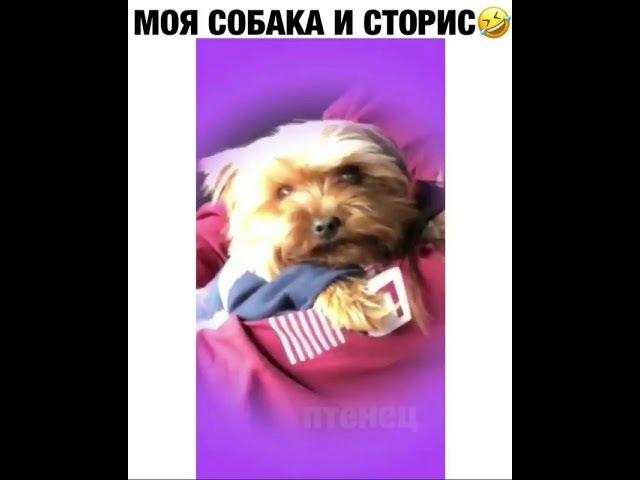 Моя собака и сторис 😈😬😂