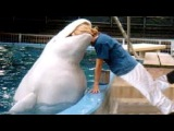 WATER ANIMALS that will make you WET YOUR PANTS FROM LAUGHING - Funny ANIMAL compilation