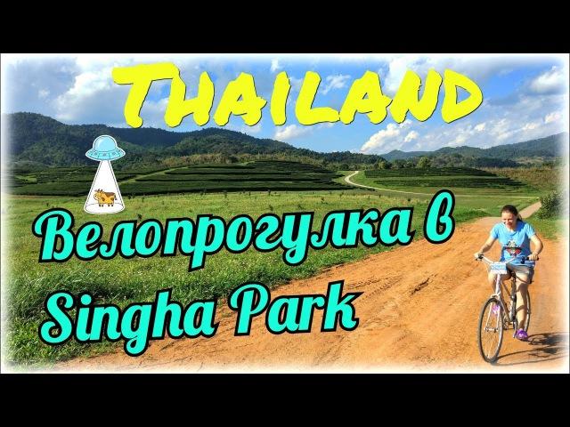 На великах в лучший парк Таиланда | Singha park | Chiang Rai