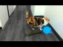 Verrückte Katzen Gurken Compilation Lustige Katzenvideos