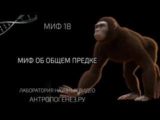 Миф об общем предке. Мифы об эволюции человека. vba j, j,otv ghtlrt. vbas j, 'djk.wbb xtkjdtrf.