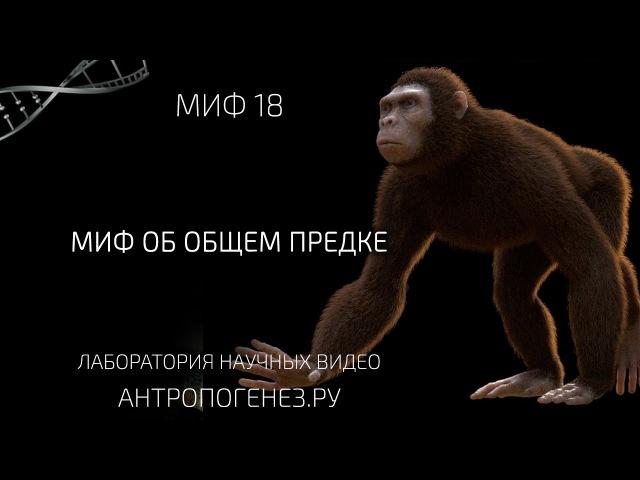 Миф об общем предке. Мифы об эволюции человека. vba j, j,otv ghtlrt. vbas j, djk.wbb xtkjdtrf.