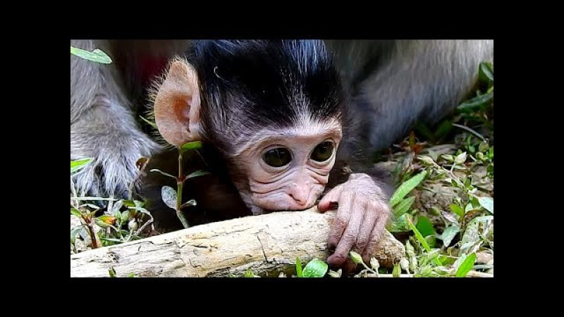 Adorable Baby Monkey Playing - Baby Monkey Very Nice And Lovely