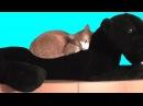 КОТ НАШЕЛ МАМУ. Смешной кот Мурлыка. Ляля снова спит. Приколы про котов.