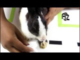 Rabbit-Funny Cute Bunny Videos Compilation with a cute boy|our Cutest Baby Bunny Rabbit|animals zon