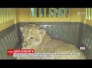 Левеня Сандра з гірким минулим переїхало на постійне місце проживання до одеського звіринцю