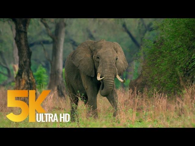 Видео о дикой природе Африки - Национальный парк Мана-Пулс - 2017