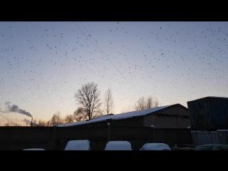 чайки над ацр