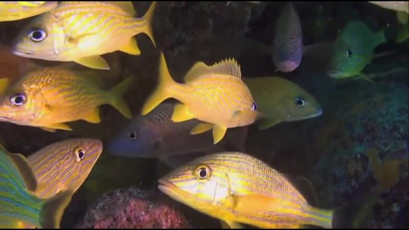 📺Что посмотреть 📺 -Багамские острова- Таинственные пещеры и затонувшие корабли