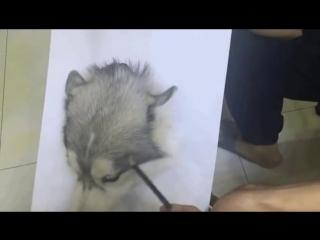 как реалистично нарисовать собаку