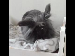 кролька заправляет кроватку.mp4