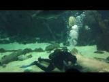 Океанариум Адлер шоу акул