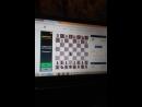 Шахматы чесс отель